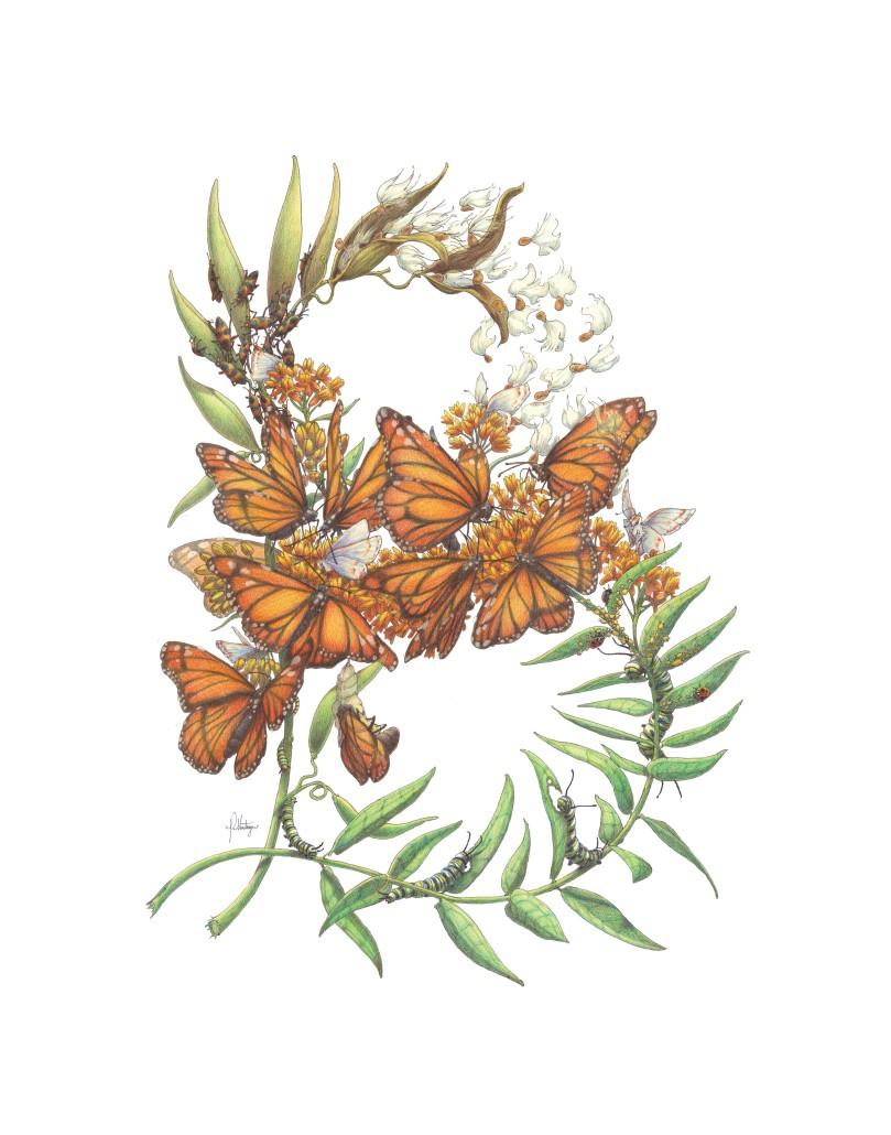 11x14 Butterfly