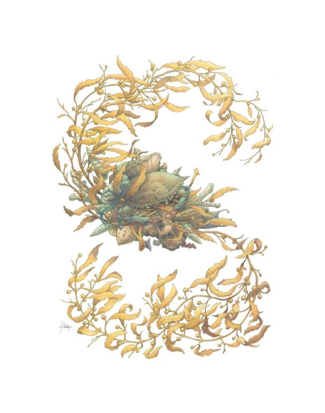 11x14 Seaweed.jpg